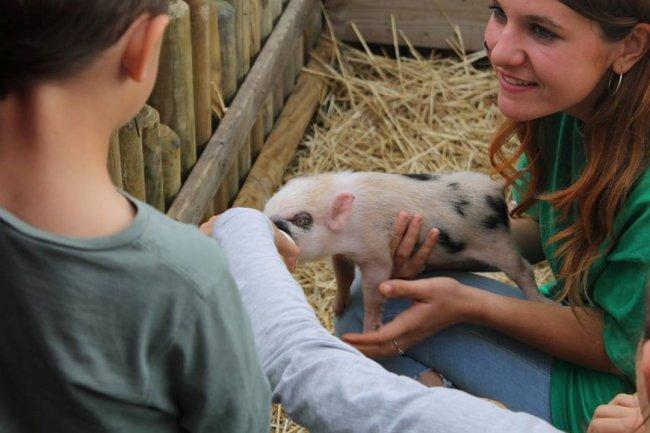 BTSA Technico-commercial option animaux d'élevage et de compagnie
