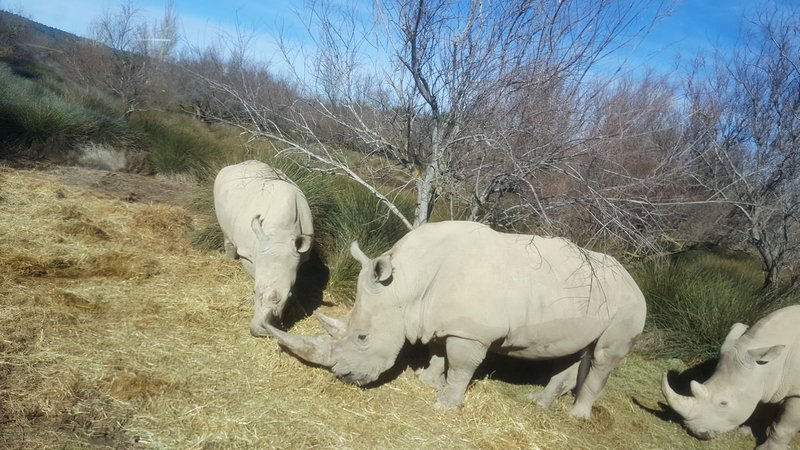 Au plus près des rhinos